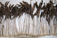 "30 Pcs BURNT COQUE FRINGE - NATURAL CHINCHILLA 8-12"" Tall Feathers Pad"