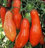 Sausage Tomato Seeds