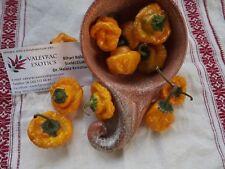 Scotch Bonnet Yellow Chili 5+ seeds
