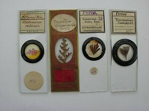 4 Antique Microscope Slides. Examples of Ferns