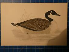 Canada Goose F.O.Morris ca.1860 kolorierter Druck H7123