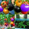 100 PCS Seeds Rainbow Tomato Plants Organic Bonsai Vegetables Herb Home Garden V