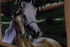 Excelente Manta de caballo