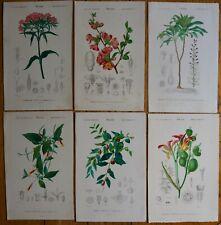 Lot N°4 de 6 Planches Botanique D' Orbigny Histoire Naturelle 1849 Gravures