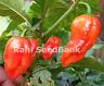 Butch T X 7 Pod Jonah - One of the World's Hottest Chilli - OZ Grown (Non GMO)