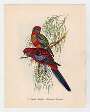 PENNANTS PARAKEET CRIMSON ROSELLA PLATE LITHO GOULD TROPICAL BIRDS vintage PRINT