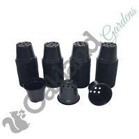 50 x 13cm Plant Pots Black Plastic 1 Litre L lt Professional Thermoformed