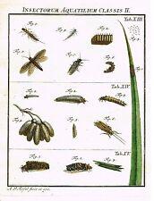 """Rosel's """"Insecten"""" - Hand-Col Copper Eng - """"INSECTORUM AQUATILIUM -XIII"""" - 1740"""