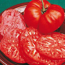 Delicious record beater heirloom bright red giant meaty beefsteak tomato 20seeds