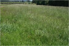 Hobby Farmers Pasture Seed Custom Mix 2.5Kg Sows up to 750sqm Cattle Pony Sheep