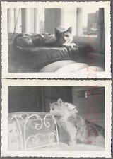Vintage Snapshot Photos Cute Pet Cat in Sunshine & Gold Fish Bowl 700204