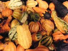 30 Mixed Gourd Lagenaria Siceraria Colorful Mix Vine Seeds + Gift & Flat Shippin