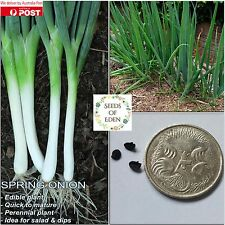 50 SPRING ONION SEEDS(Allium fistulosum); Ideal for salads and stir fries