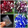 30pcs rare dragon rose flower seeds beautiful courtyard perennial plants decorEB