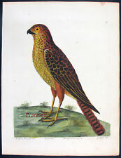 1739,ALBIN'S Hand/Color FOLIO BIRDS *RARE* SUPERB THE SPARROW HANK UWG