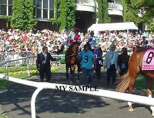 NORMANDY INVASION 8 by 10 PHOTO 2014 THE METROPOLITAN Horse Race BELMONT PARK #1