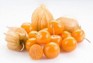 Ground Cherry Tomatillo Seeds      bin270