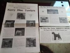 3 x antique Kerry Blue Terrier pages/clippings Our Dogs 1925, classy, scarce!