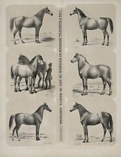 "1872 HORSE BREEDS, American, antique decor, Drawings, 20""x16"" Art Print"