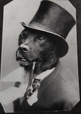 Unique Bizarre Odd Interesting Victorian Dog With Pipe tintype C1452RP