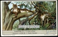 Lynx And Puma Large Wild Cat Nice 60+ Y/O Trade Ad Card