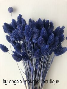 """80 GRAMS BUNCH DRIED PHALARIS WEDDING FLOWERS DECORATION BLUE UP TO 16"""""""