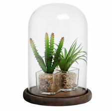 Clear Glass Cloche Bell Jar Display Case with Rustic Wood Base, 10 X 7 Inches