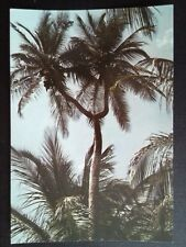 CPM MARTINIQUE 1979 THE COCONUT TREE A DEUX HEADS BOTTOM LAHAYE