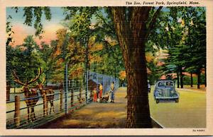 Vtg 1930s The Zoo Forest Park Springfield Massachusetts MA Postcard