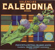 *Original* CALEDONIA Tartan PLAID Flower UNIFORMLY GOOD Orange Label NOT A COPY!
