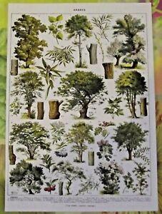 Art Print poster affiche Antique Book Page  Sumac Arbousier Saule Erable Frêne