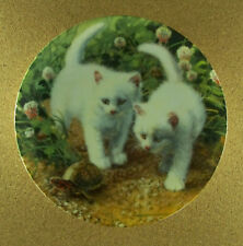 A Chance Meeting: White American Shorthairs Plate Amy Brackenbury's Cat Tales Co