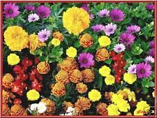 Lot de graines de  Fleurs 15 variétés - Port offert !!!