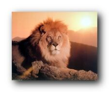 Lion King At Sunset African Wildlife Animal Wall Decor Art Print Poster (16x20)
