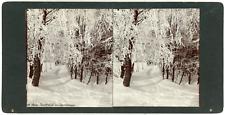 STEREO Pologne, Poméranie, Stolp, Słupsk, Paysage d'hiver, arbres gelés, ci