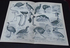 Old Print Ornithology Birds Wading Running Scractching
