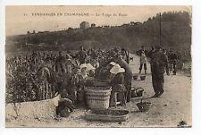 CHAMPAGNE CPA 51 Vins Vignes et thémes Vendanges Une scene de triage du raisin
