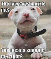 Cute  Pit Bull Terrier Dog  Refrigerator / Tool  Box  Magnet