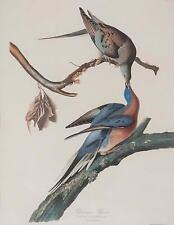 Passenger Pigeon, John J. Audubon. Blank Journal : 150 Blank Pages, 8,5x11.