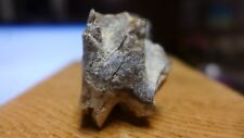 Geological Enterprises Oligocene fossil Subhyracodon tooth Wyoming