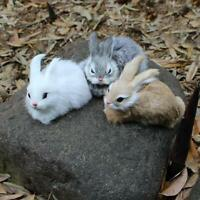 Mini lebensechtes weißes Kaninchen-Plüsch-Tier-Osterhasen-Kaninchen-Modell X1V5