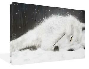 Canvas Wall Art Print Of A White Wolf Lying In The Snow Picture Painting