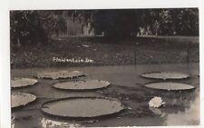 Java, Botanical Gardens Batavia RP Postcard, B323