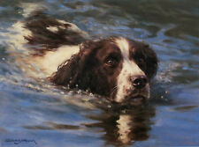 ENGLISH SPRINGER SPANIEL ESS GUN DOG FINE ART LIMITED EDITION PRINT Fred Haycock