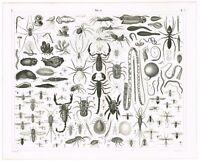 ORIGINAL ANTIQUE PRINT VINTAGE 1851 ENGRAVING ENTOMOLOGY INSECTS SCORPION SPIDER