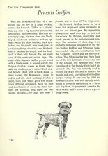 "The Brussels Griffon - Vintage Dog Art Print - Matted ""G"""