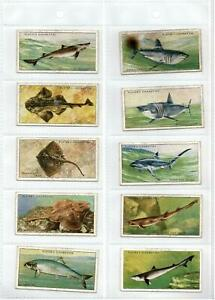 1930's PLAYERS CIGARETTE CARDS SEA FISHES - FULL SET 50/50 - GOOD Cond