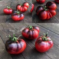 ☆ Tomate Indigo Blue Beauty ☆ 10 Samen , Super Beefsteak Tomate
