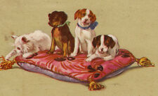 Antique postcard Beagle English TErrier Pointer dog pink pillow white kitty cat