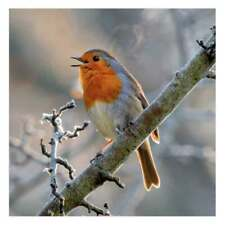 Singing Robin Christmas Cards Pack of 8 Cards Charity SongBird Survival
